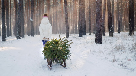 A little girl is carrying a Christmas tree on a wooden sled. Goes through the snow-covered forest, the suns rays shine through the trees. Soon Christmas concept 写真素材