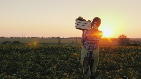 Rear view: A female farmer with a box of fresh vegetables walks along her field. Healthy Eating and Fresh Vegetables