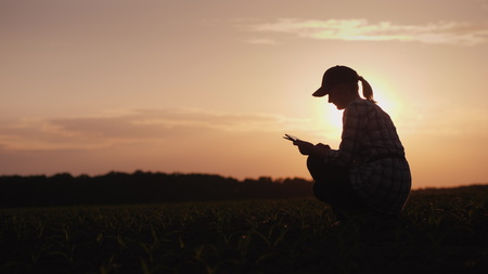 A female farmer is working in the field at sunset. Studying plant shoots, using a tablet Stock Photo