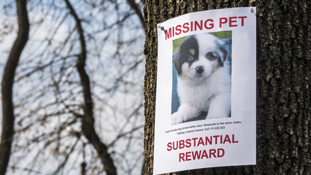 Poster with information about the missing pet - a little puppy