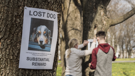 A man and a woman are looking for a missing pet, putting up posters