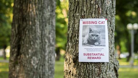 Banner mit der Ankündigung der vermissten Katze, die an einem Baum im Park hängt Standard-Bild