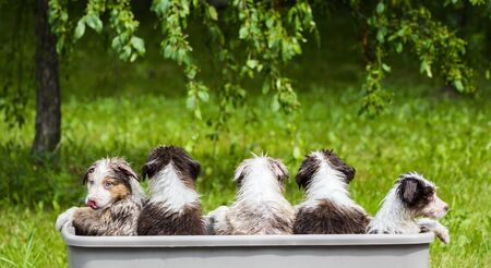 A few funny puppies are taking a bath in a picturesque place. Imagens