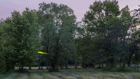 Night shot of the forest where fireflies fly. An example of bioluminescence in nature Imagens