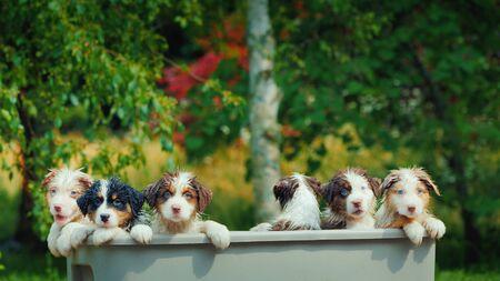 Group portrait of cute wet puppies
