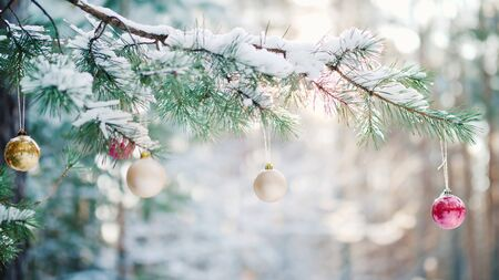 A green branch of spruce with Christmas toys and fluffy snow on green branches in a pine winter forest Imagens