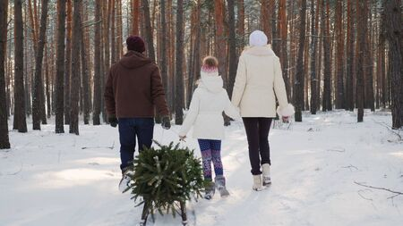 A married couple with a child walks through a snow-covered forest, a girl is dragging a sled with a Christmas tree. Christmas Eve and New Years Eve. Rear view