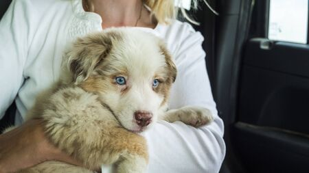 The owner of the puppy holds the pet in his arms, travel together in the car