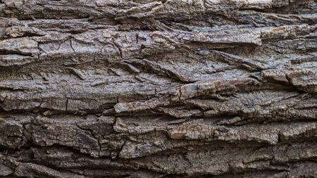 Tree bark texture, embossed bark