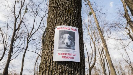The poster of the missing dog breed Australian shepherd