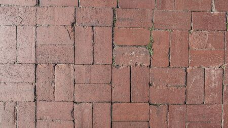 Tile on the sidewalk, grass sprouted through the seams