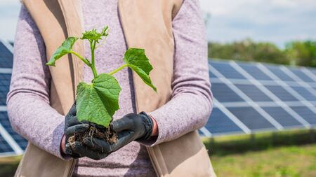 Farmer holds seedling in his hands, in the background solar panels