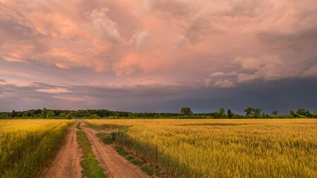 Road to the field of wheat against the background of a dramatic storm sky