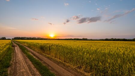 Road to the wheat field where the sun sets 写真素材