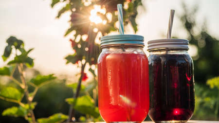 Two Natural Berry Drink Amid Red Currant Bush 写真素材