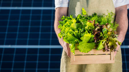 Farmer holds a box of lettuce and greenery against the background of solar power plant panels
