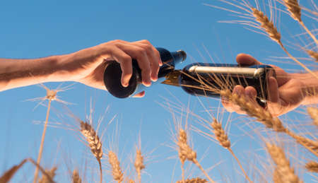 Two men clink bottles of beer on a background of a wheat. Low angle shot 写真素材