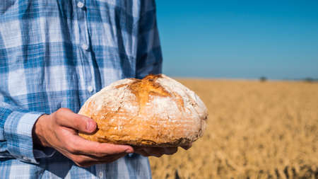 Farmer holds a loaf of bread over wheat ears in a field