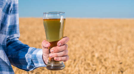 Mens hand holds a glass of light beer against the background of a wheat field on a summer day