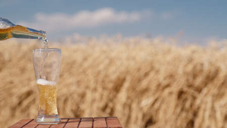 A man pours beer from a bottle into a glass. Against the background of wheat ears on the field and blue sky 写真素材