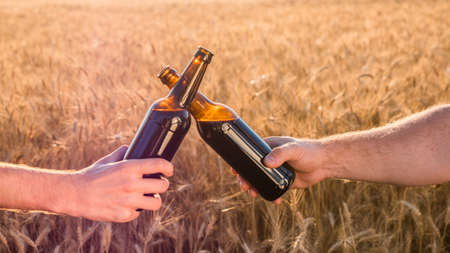 Two hands clink bottles of beer on a background of a wheat. Side view 写真素材