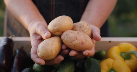 A farmer holds potatoes over the counter at a farmers market. Vegetables from local farmers