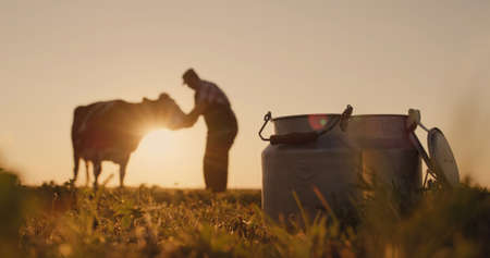 The owner is near his cow at sunset. In the foreground are milk cans