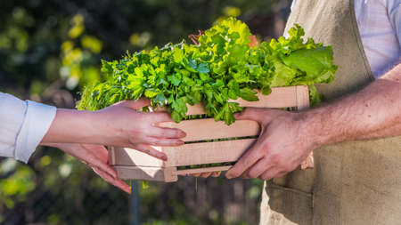Buyer takes from the hands of the farmer a box with herbs and salad. Фото со стока