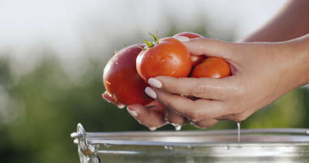 The woman dipped some fresh tomatoes in the water. Drops of water slowly flow down the vegetables