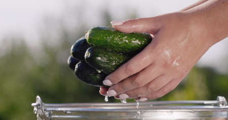 The woman keeps a few fresh cucumbers washed in a bucket, water flows down them