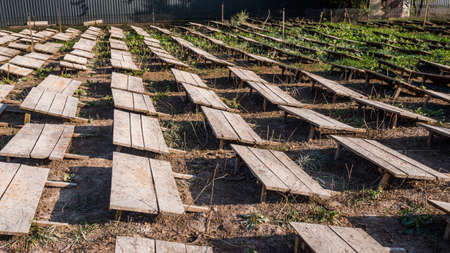 Field where snails are grown, boards protect animals from the sun