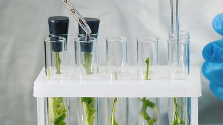 Macroshooting of test tubes with plants, they add the drug. Genetic modifications concept
