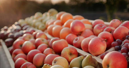 The counter with seasonal fruit at the farmers market - apples, pears and other