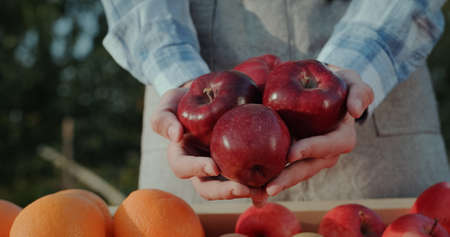 The farmer keeps a number of large red apples above the fruit counter. Goods from local farmers Reklamní fotografie