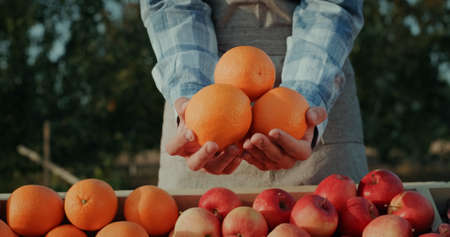The farmer keeps a number of large oranges above the fruit counter. Goods from local farmers Reklamní fotografie