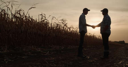Two farmers shake hands, stand on the road between fields of corn at sunset 免版税图像
