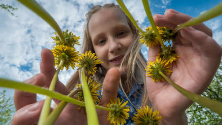 Funny kid looks at yellow dandelions. Low angle view