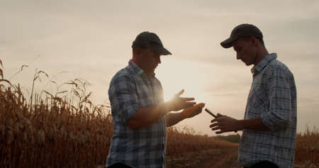 Two farmers work in the field, study corn, communicate Imagens