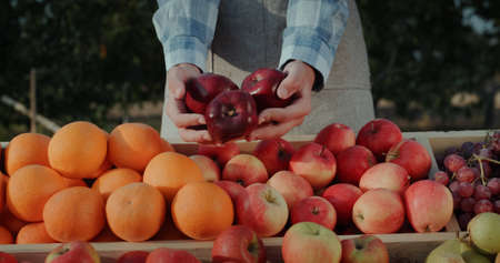 Hands of the seller with snow red apples above the counter. Farmers Fair