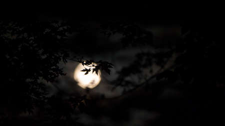 Full moon shines through the leaves of the tree