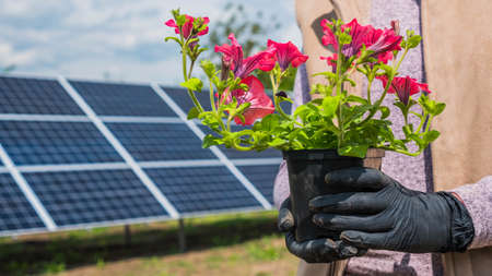 Woman holds pot with flower in front of home solar power plant Imagens
