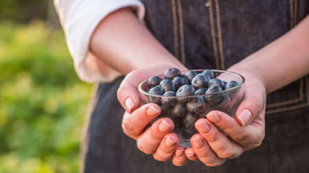 Farmer keeps a handful of blueberries - a healthy berry full of vitamins Imagens