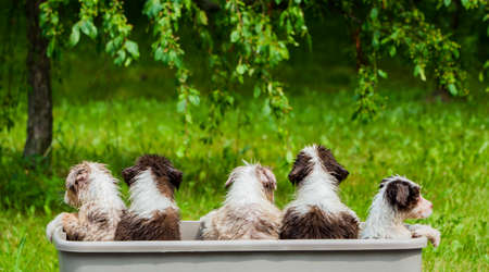 Rear view of a group of funny wet puppies sitting in a basket