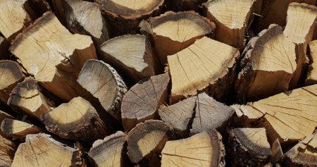 Oak firewood is dried in a woodpile