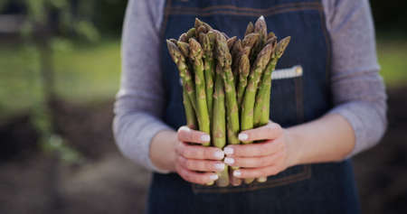 Female farmer holds sprouts of fresh asparagus, stands on a field