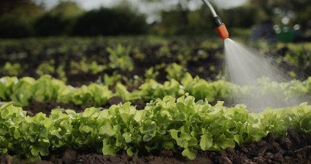 Farmer sprays green shoots on field, processing plants