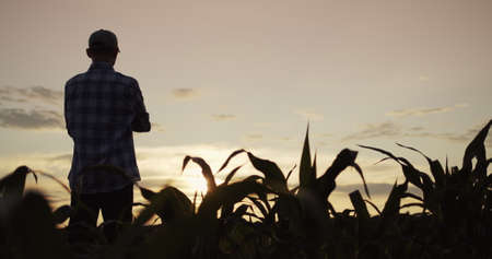 The silhouette of a farmers man standing in a field of corn looks forward to the sunset 写真素材