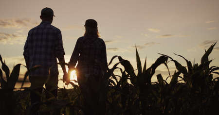 A young couple takes hands. Silhouettes of young people, view from behind. Standing in a field of corn 写真素材