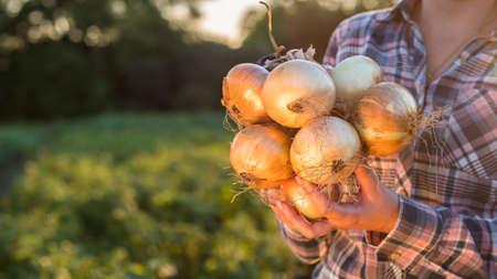Farmer holds a braid of ripe onion