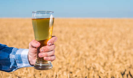 A man holds a glass of cold beer against the background of a field of yellow wheat